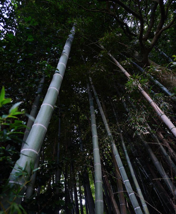 bamboo2_dsc06330