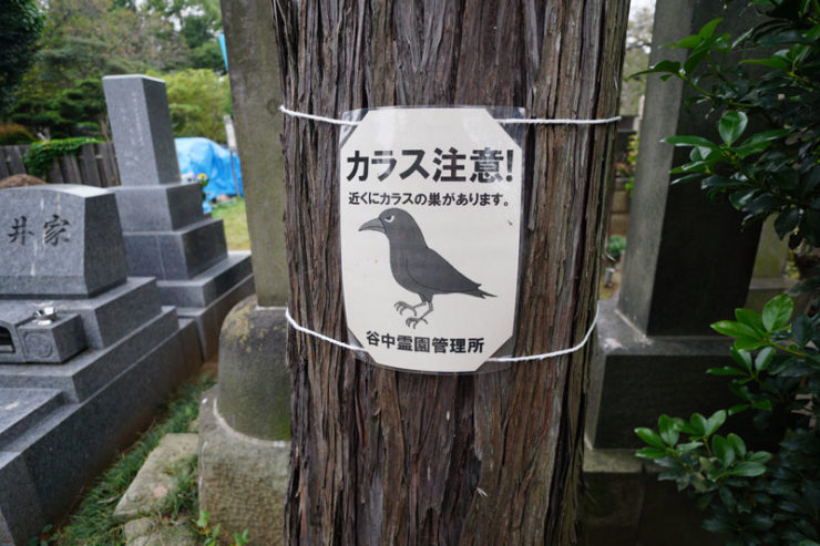 crows1_dsc06685