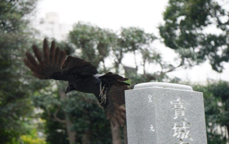 crows2_dsc06703