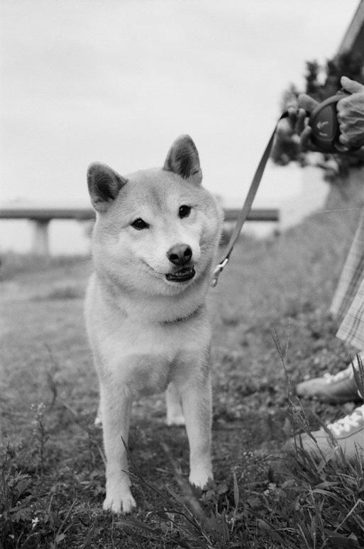 doggy_000532010013