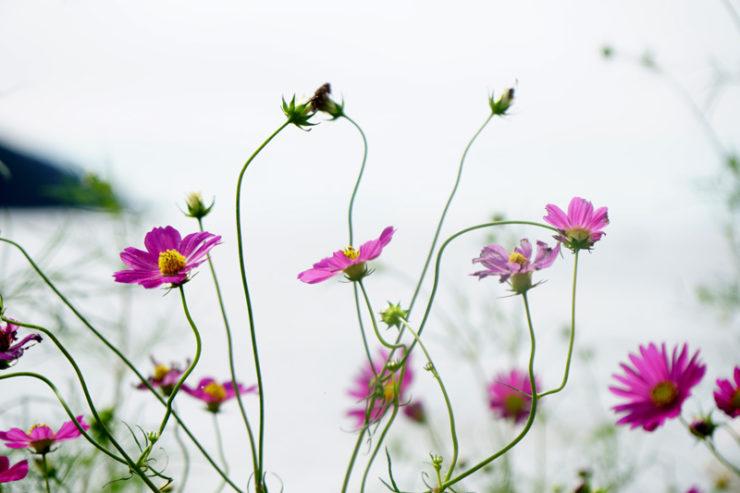 flowers_clr_dsc05248