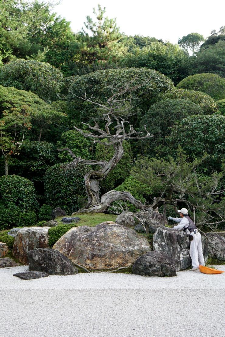 kyototree_dsc05682