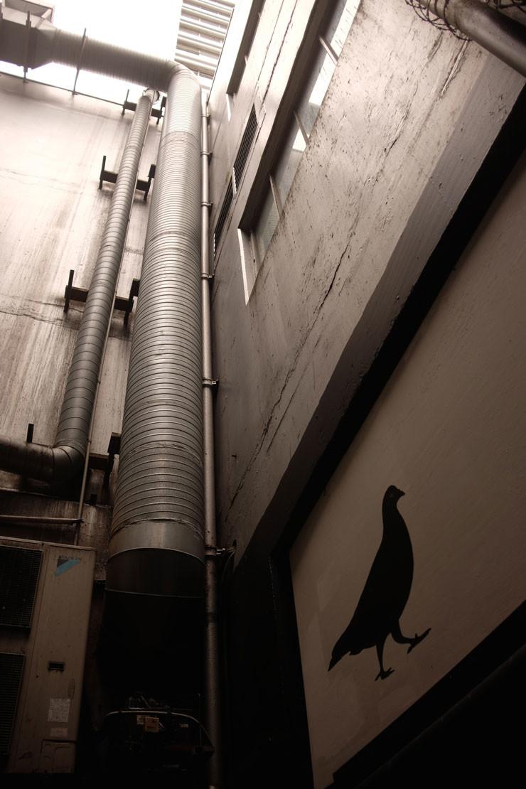 PigeonPipe
