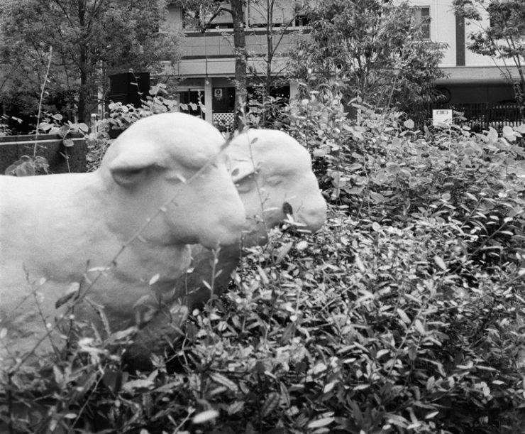 sheeps_000521030007