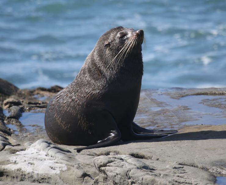 Seal4L2A9642