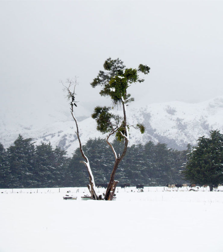 SnowTreeDSC01887