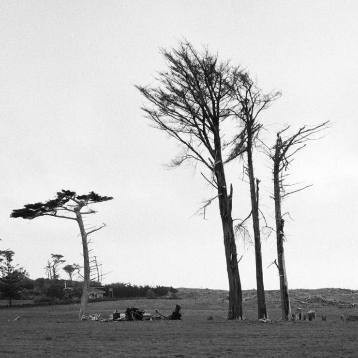 ttrees_000521040008-trees-crop