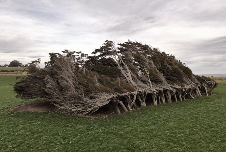 TorturedTrees
