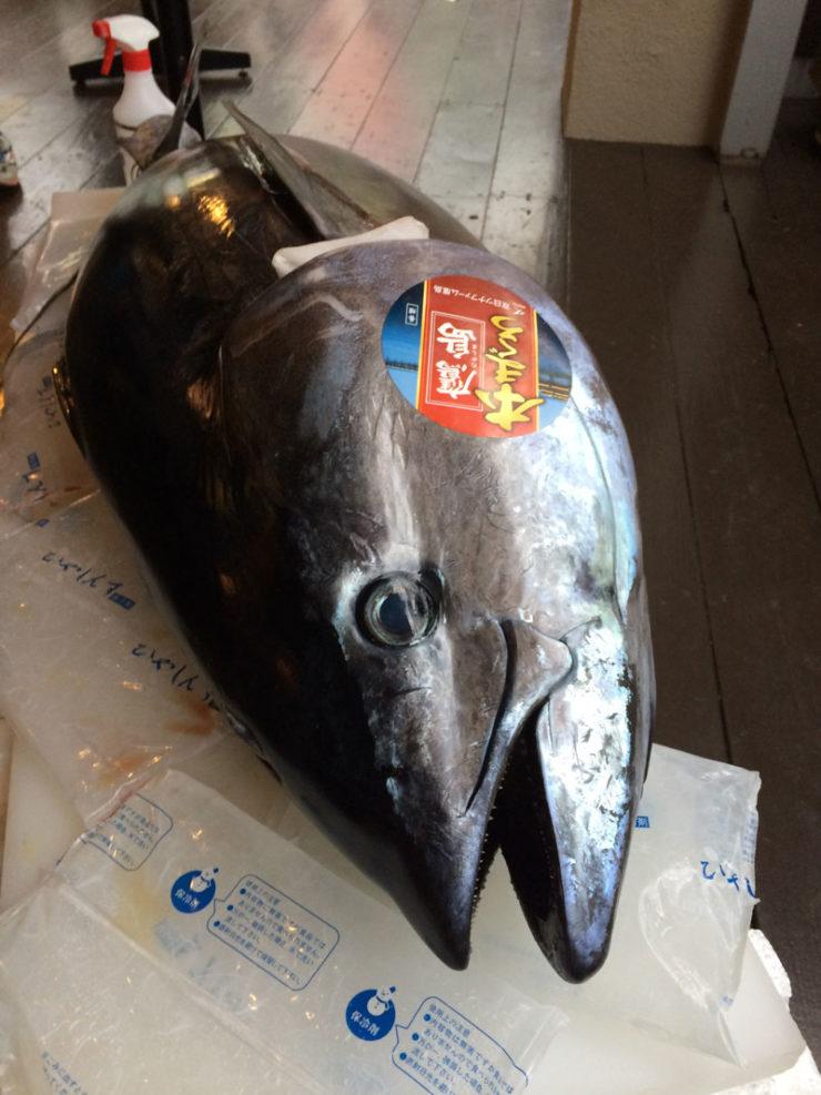 tuna02_img_3804