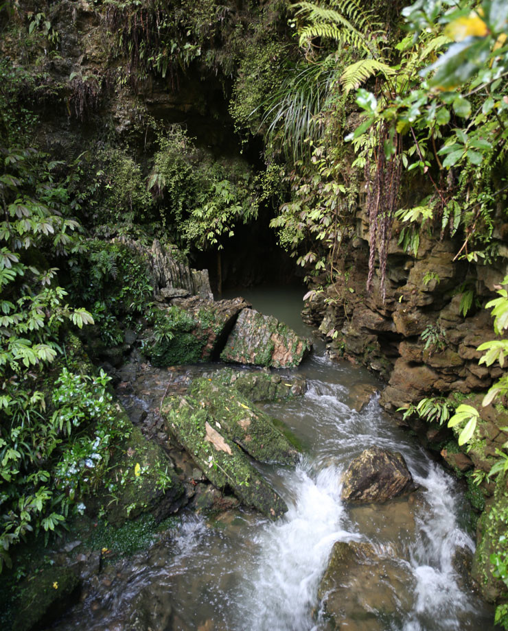 Waitomo_Caves1