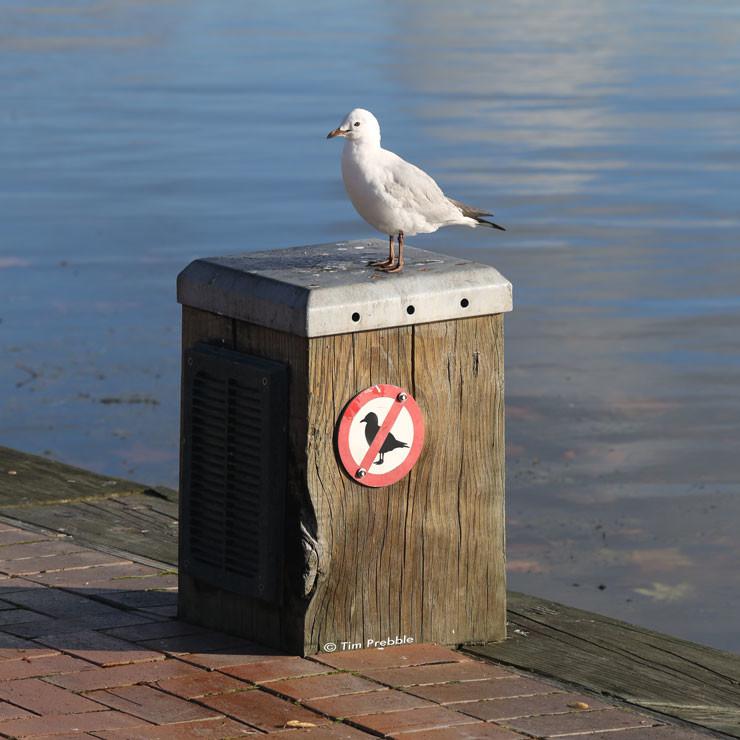 gull-sign1-4L2A8883