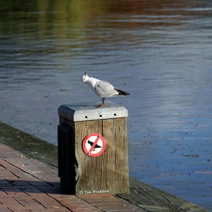 gull-sign2-4L2A8880