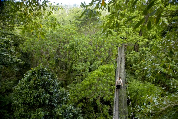 Samoa rainforest